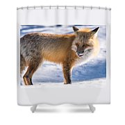 The Handsome Hunter Shower Curtain