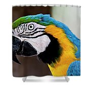 The Happy Macaw Shower Curtain