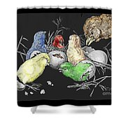 The Hatching Of Chicks. Shower Curtain
