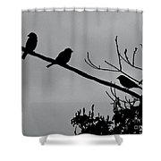 Leo, The Hawk Is Two Doors Down Shower Curtain
