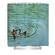 The Herd Series - Duck Meet Shower Curtain