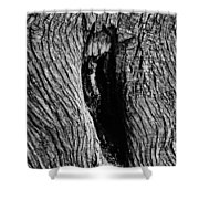 The Hermit In The Woods Shower Curtain