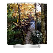 The Hidden Log Rock Shower Curtain