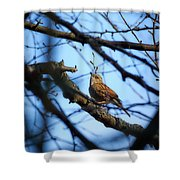 The Hiding Singer. Dunnock Shower Curtain