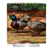 The Honeymooners - Mallard Ducks  Shower Curtain