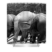 The Horses Of Mackinac Island Michigan 03 Bw Shower Curtain