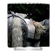 The Horses Of Mackinac Island Michigan 04 Shower Curtain