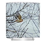 The House Finch In-flight Shower Curtain