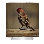 The House Finch Shower Curtain
