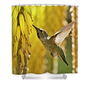The Hummingbird And The Yellow Aloe  Shower Curtain