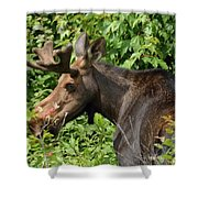 The Hungry Moose Shower Curtain
