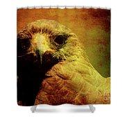 The Hunter . Portrait Of A Hawk . Texture . 40d7877 Shower Curtain