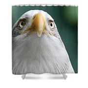 The Hunters Stare Shower Curtain