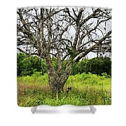 The Hunting Tree Shower Curtain