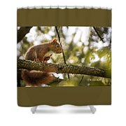 The Hypnotized Squirrel Shower Curtain