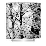 The Ice Queen's Garden Shower Curtain