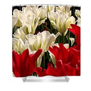The Image Of A Tulip Shower Curtain
