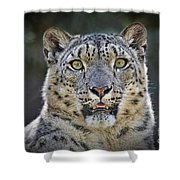 The Intense Stare Of A Snow Leopard Shower Curtain
