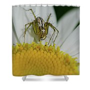 The Itsy Bitsy Spider Shower Curtain