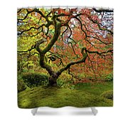 The Japanese Maple Tree In Spring Shower Curtain