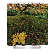 The Japanese Maple Tree In Autumn 2016 Shower Curtain