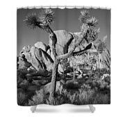 The Joshua Tree Shower Curtain