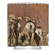The Journey 2 Shower Curtain