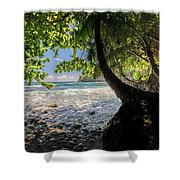 The Jungle At Onomea Bay  Shower Curtain