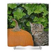 The Kitten And The Pumpkin Shower Curtain