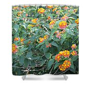 The Lantana In The Near 20 Shower Curtain