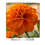 The Last Marigold Shower Curtain