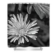The Lawn King Bw Shower Curtain