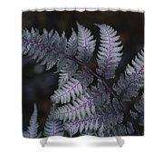 The Leaf Of A Japanese Painted Fern Shower Curtain