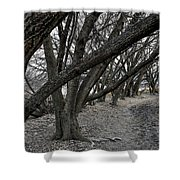 The Leaning Boughs Shower Curtain