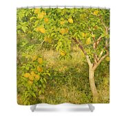 The Lemon Tree Shower Curtain