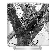 The Leopard's Stare Shower Curtain
