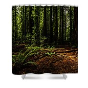 The Light In The Forest No. 2 Shower Curtain