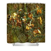 The Light In The Forest Shower Curtain