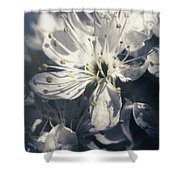 The Light Of Spring Petals Shower Curtain