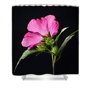 The Light Rose Of Sharon 2017 Square Shower Curtain