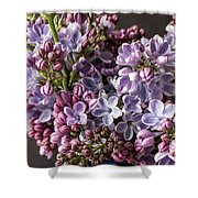 The Lilac  Shower Curtain
