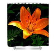 The Lily  Shower Curtain