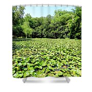 The Lily Pond #1 Shower Curtain