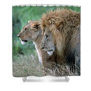 The Lion And His Lioness Shower Curtain