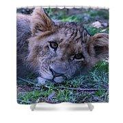 The Lion Cub Shower Curtain