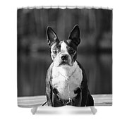 The Little Beast Shower Curtain