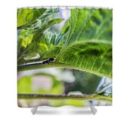 The Lone Ant Shower Curtain