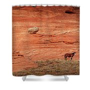 The Lone Horse Shower Curtain