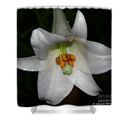 The Lone Lily Shower Curtain