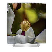 The Lone Lotus Shower Curtain